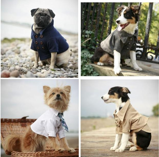 Rover Dog Clothing