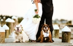 dogs at a wedding